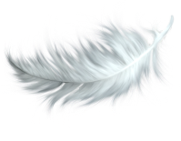 feather_png12958